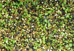 秋播种子如何播种?