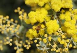 常见的蜜源植物有哪些?