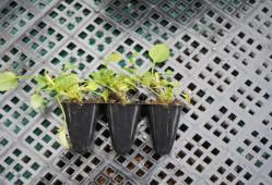 植物幼苗徒长怎么办?