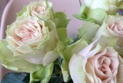 月季花——朵蕾(トレミヨンヌ)