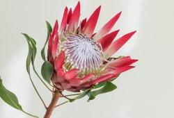 冬季鲜花如何养护?