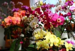 蝴蝶兰常用的植料有哪些?