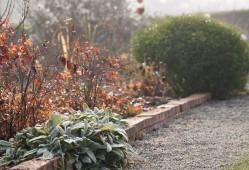 花园冬季如何清园?