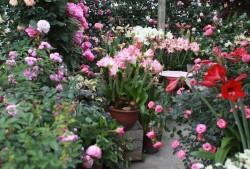 屋顶花园全是盆栽,如何实验立体感?