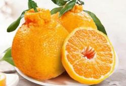芦柑、橘子和丑橘有什么区别