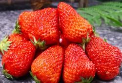 盆栽草莓品种推荐