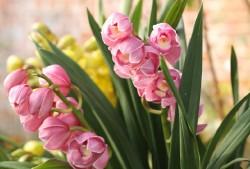 冬季开花的植物有哪些?