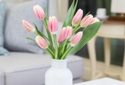 鲜切花郁金香的养护