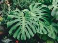 室内绿植常见问题有哪些?