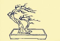 双干式岭南盆景造型(制作图解)