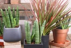 适合放在桌面又好养护的植物有哪些?