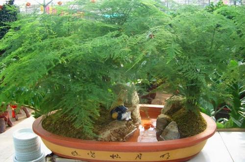 文竹多久浇一次水
