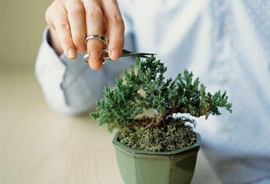 冬季植物剪枝有什么好处