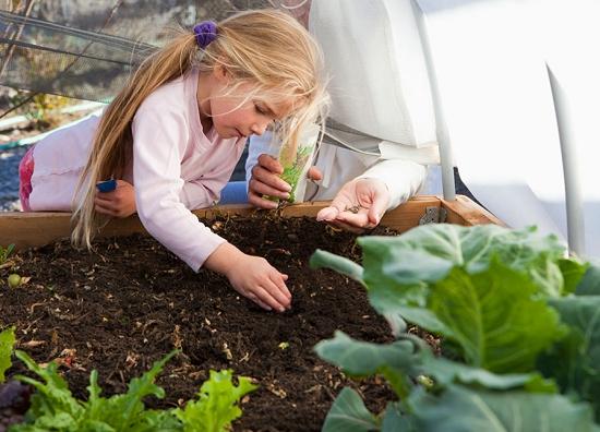 新手入坑花卉种植通用的种子播种方法