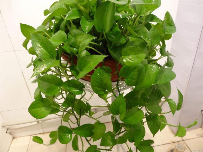哪些花卉植物适合在室内养?
