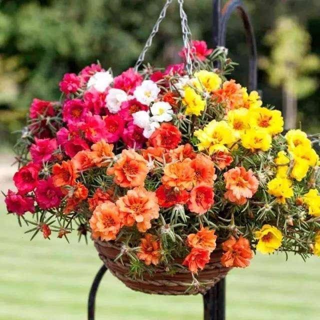 花卉植物养爆盆的5个技巧