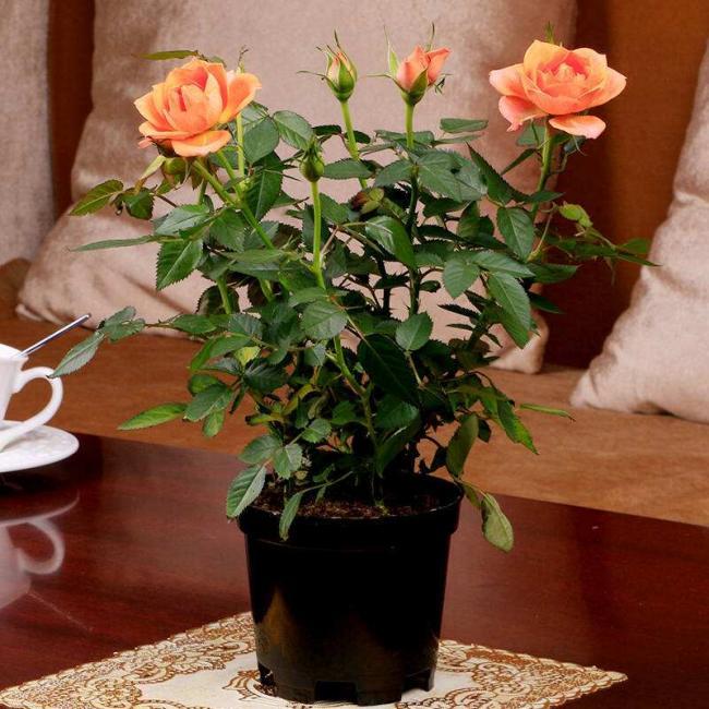花卉栽培:学会这些施肥小技巧