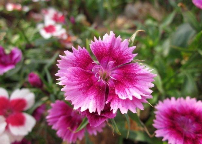 花卉播种十大秘籍