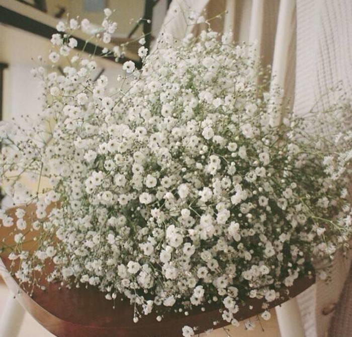 满天星盆栽日常养护八要点