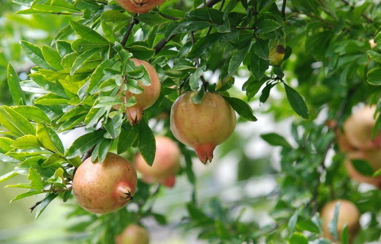 秋季花卉植物开花结果的肥水管理