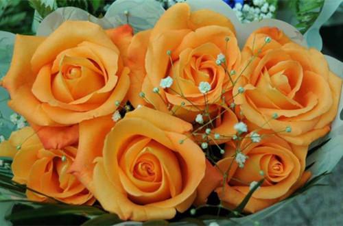 橙玫瑰的花语是什么
