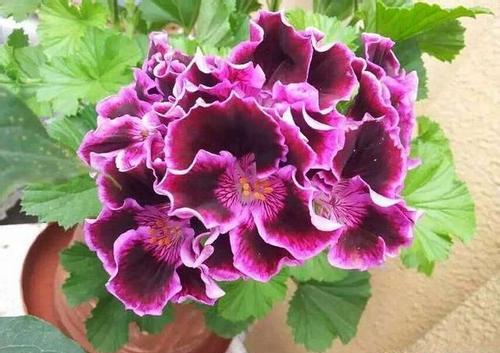 夏季养花管理养护五要点