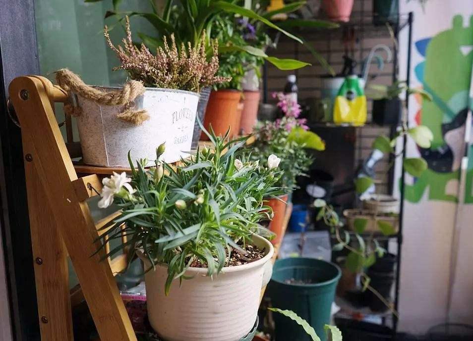 家庭阳台养花的禁忌