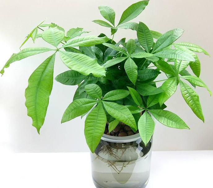 花卉绿植水培攻略