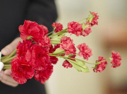 康乃馨的花语和象征代表意义是什么?