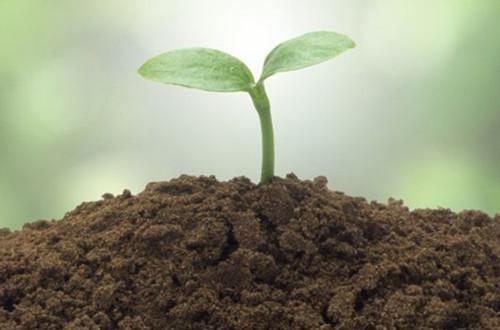 怎样让土壤变酸 如何增加土壤酸性