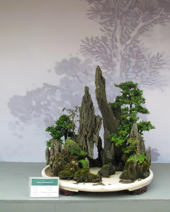 中国五大流派盆景精品展——川派盆景