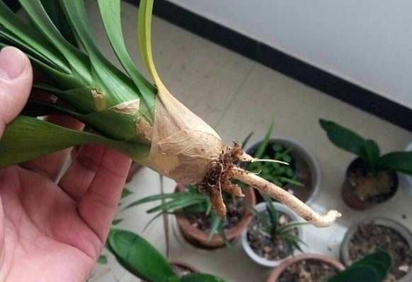 植物烂根怎么办?不同植物烂根的处理方法