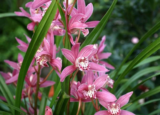 五个超耐寒花卉,特别适合北方家庭栽植