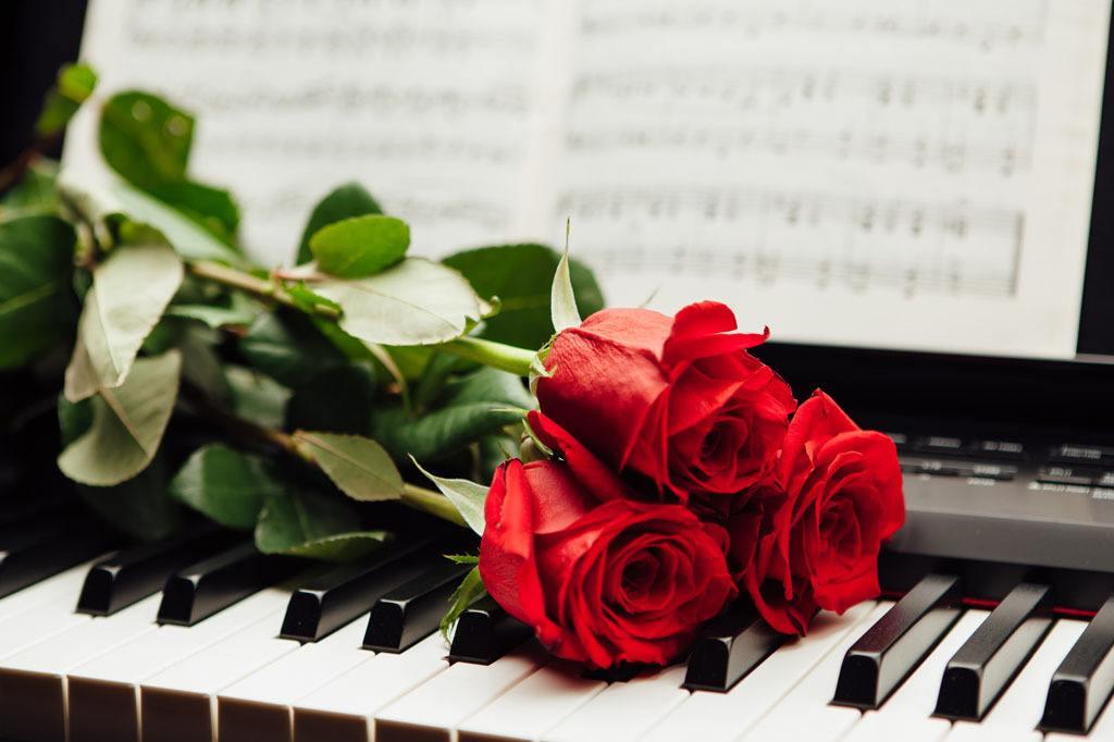 玫瑰花和月季有什么不同?