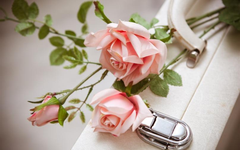 玫瑰花语大全!原来送玫瑰花有这么多讲究!