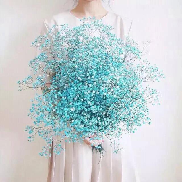 蓝色满天星花语:真心喜欢你