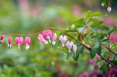 对光照需求少还能开花的植物有哪些?