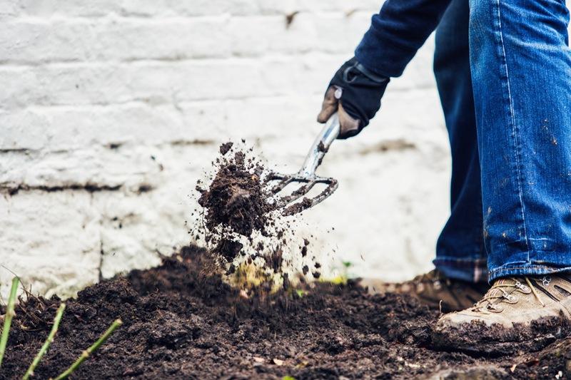 藤本月季地栽的种植方法