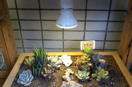 多肉植物补光用哪种补光灯好?