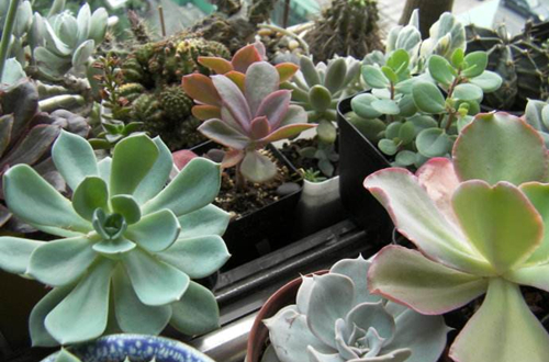 冬天花卉什么时候搬到室内?冬季花卉养护技巧