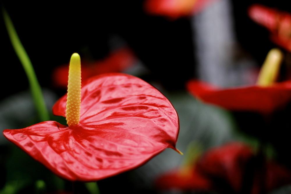 冬季家庭花卉越冬养护要点