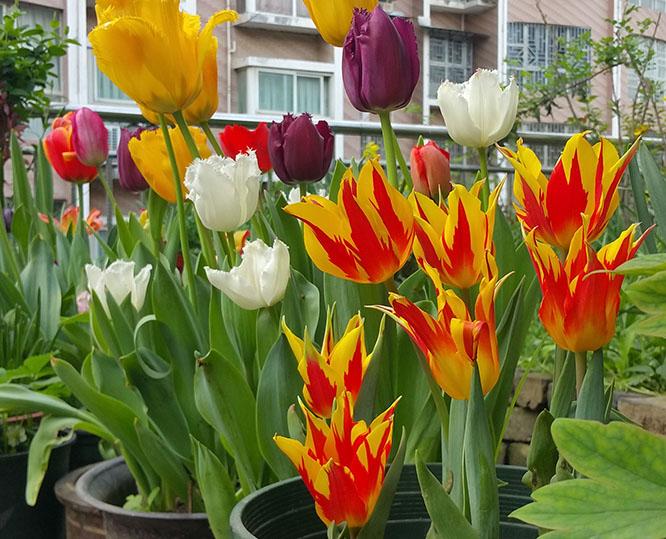 这些花卉植物都有毒,家里有养它们要注意!