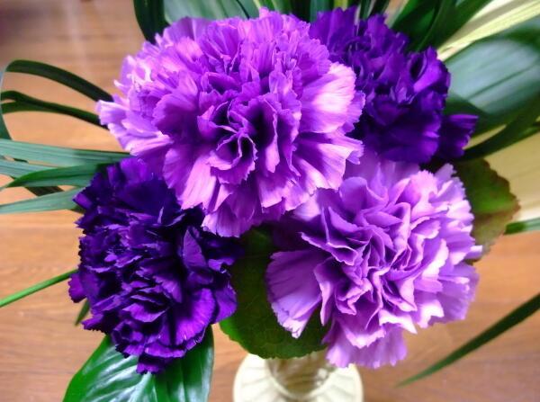 紫色康乃馨的花语