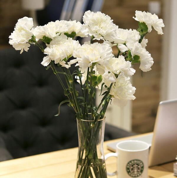 白色康乃馨的花语和送花禁忌