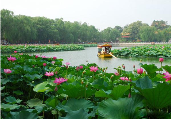 中国十大名花的花语大全