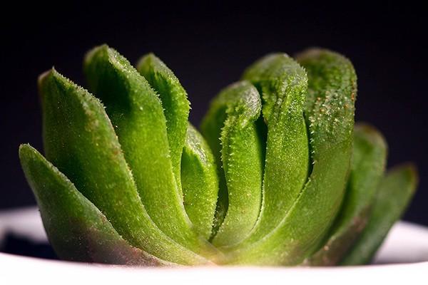 多肉植物怎么繁殖?盘点多肉的各种繁殖方法