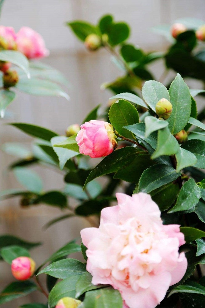 年宵花卉有哪些?最受欢迎的年宵花