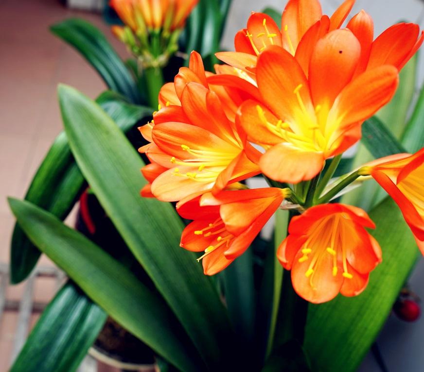 适合在客厅养的花,就养这4种,既好看又好养!