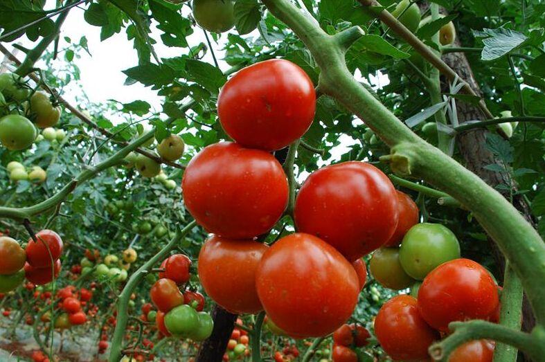 每个月份都适合种什么瓜果蔬菜