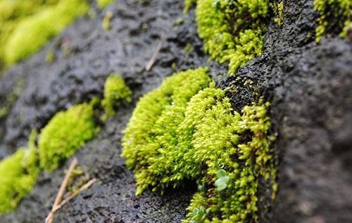 苔藓养护小常识